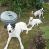 Becket, Grace and Travis at the allotment