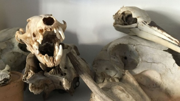 The skulls!